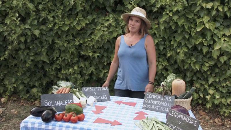 huerto urbano _ elegir cultivos