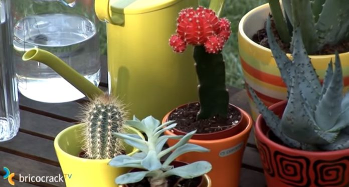 cactus y crasas _ portada